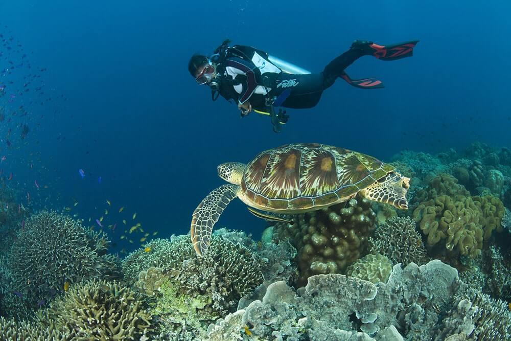 apo island, dive dumaguete, Dive Apo Isand, Apo Island diving,