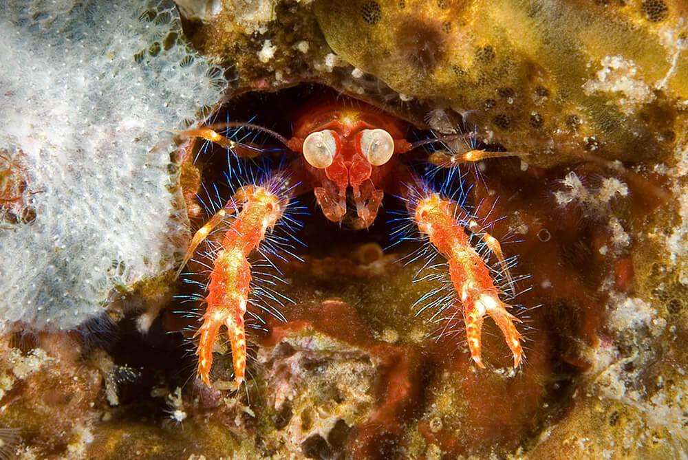 Scuba Dive, Macro Diving, Critter Dive,