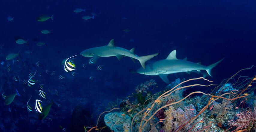atlantis-underwater-naturalist