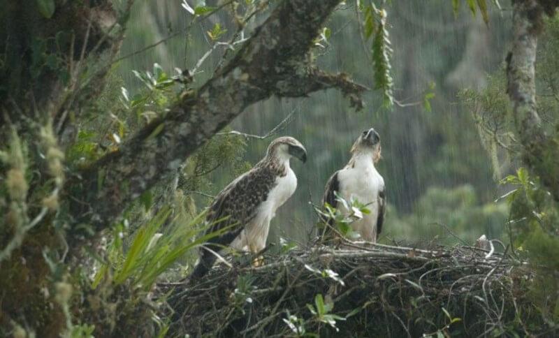 Bird Watching, Philippine Eagle, Dumaguete Activities