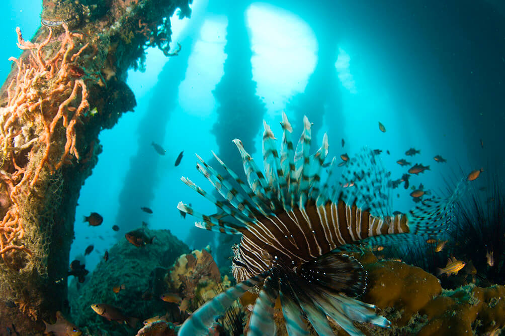 Underwater Dumaguete